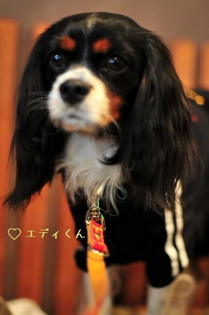 2008.11.8(えにわんキャバ会) 002