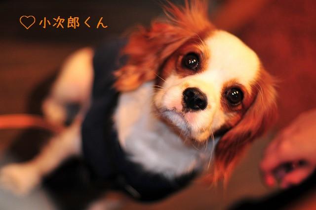 2008.11.8(えにわんキャバ会) 094