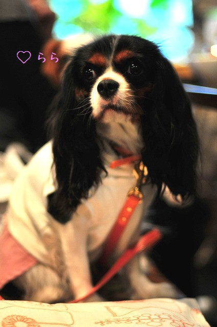 2008.11.8(えにわんキャバ会) 017