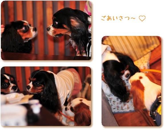 2008.11.8(えにわんキャバ会) 045a
