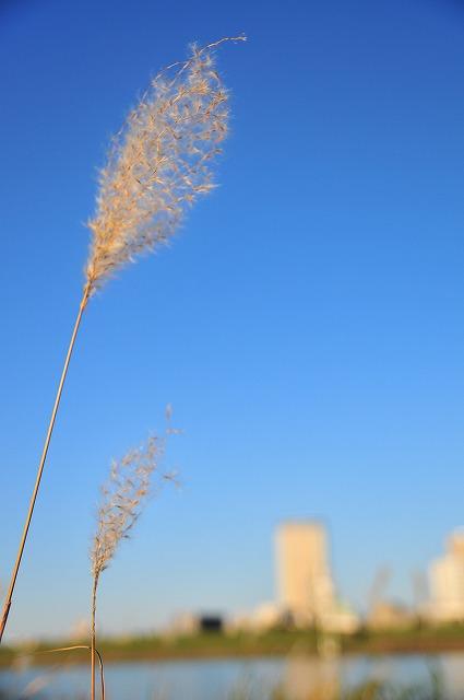 2008.11.22(河川敷) 037