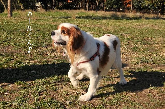 2008.11.30(水元公園キャバオフ会) 092