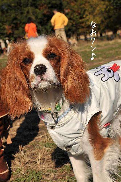2008.11.30(水元公園キャバオフ会) 044