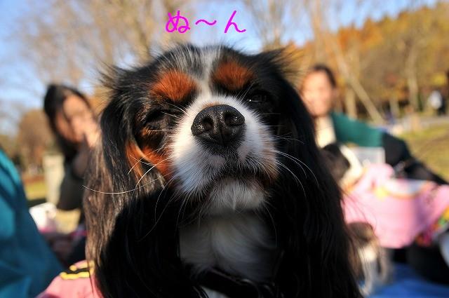 2008.11.30(水元公園キャバオフ会) 106
