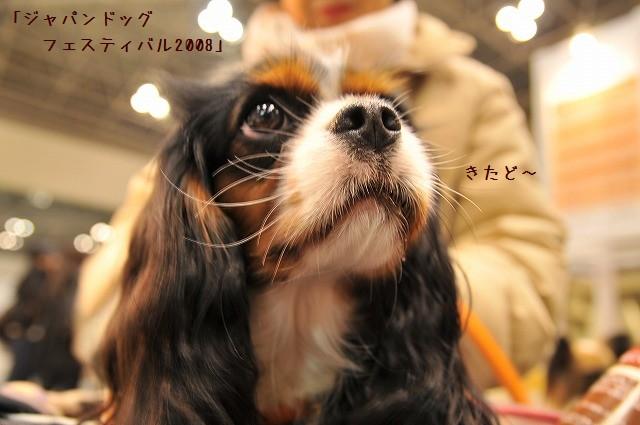 2008.12.20(ドッグフェスティバル) 004