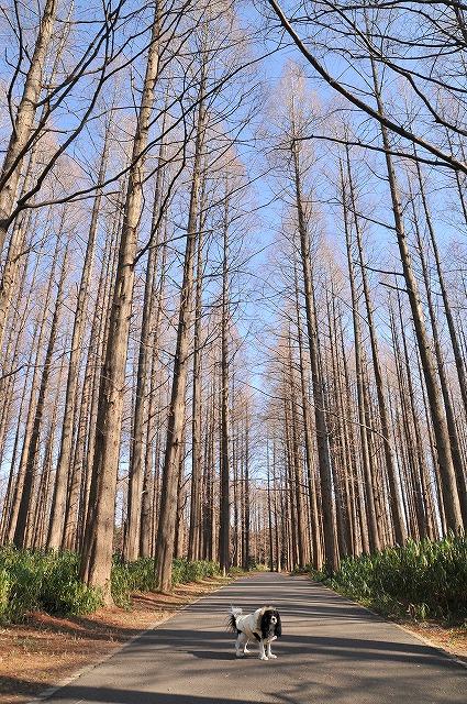 望2008.1.5(水元公園&わん茶房) 053