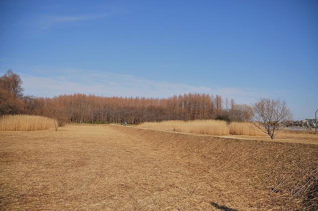 望2008.1.5(水元公園&わん茶房) 082