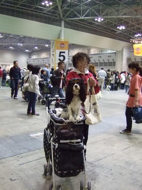 2009.4.4(ドッグショー2009) 006a