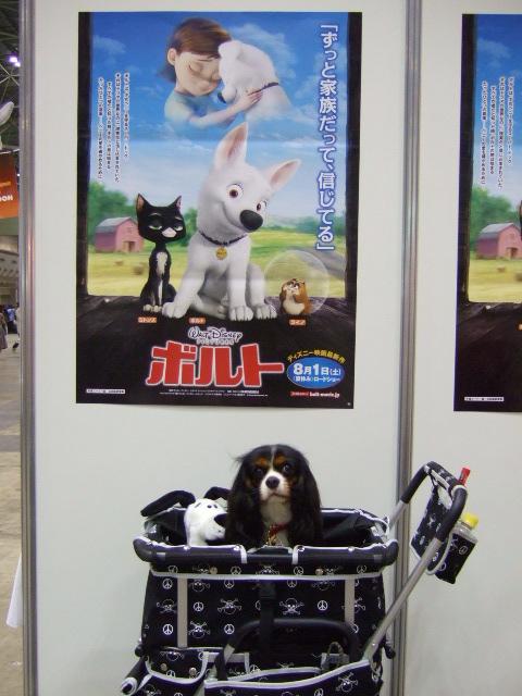 2009.4.4(ドッグショー2009) 036