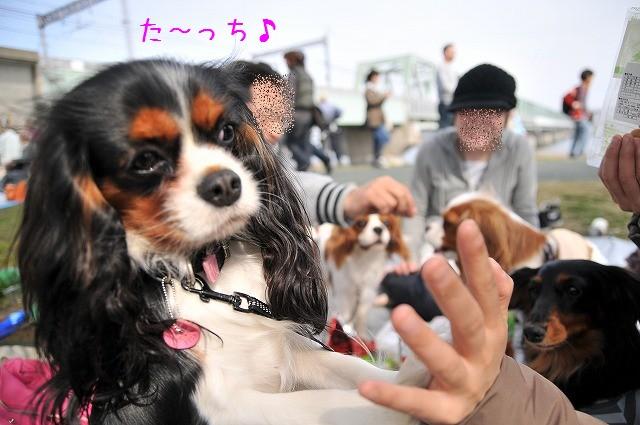 2009.4.5(小松川千本桜) 106