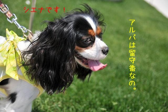 2009.5.10(ららぽーと豊洲) 006