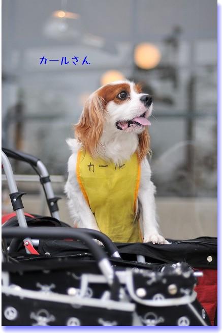 2009.5.30(キャバリア撮影会@豊洲) 012