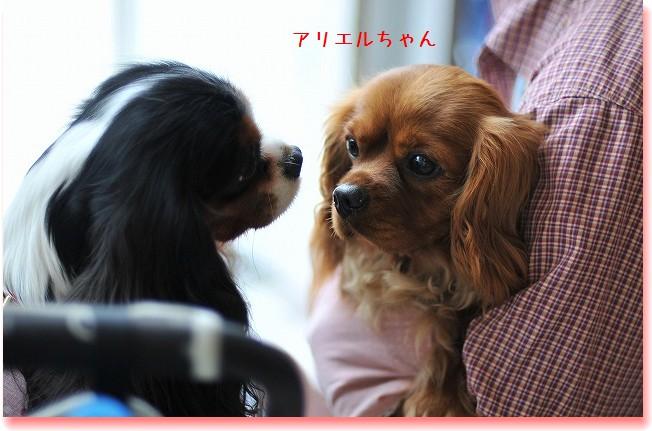 2009.5.30(キャバリア撮影会@豊洲) 058