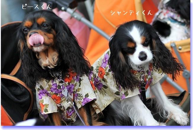 2009.5.30(キャバリア撮影会@豊洲) 065