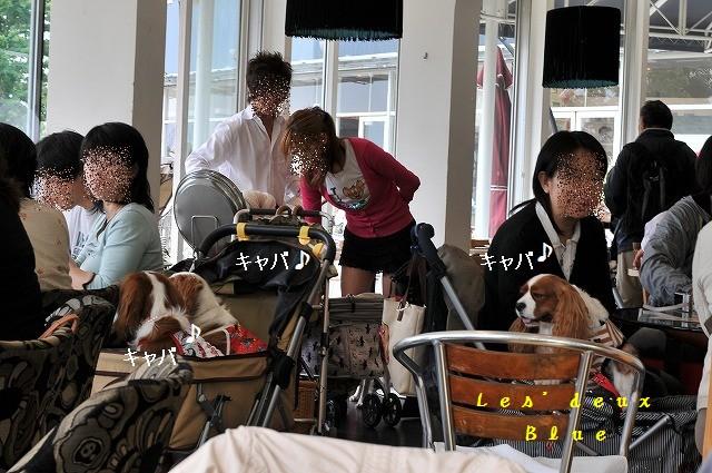 2009.5.30(キャバリア撮影会@豊洲) 102
