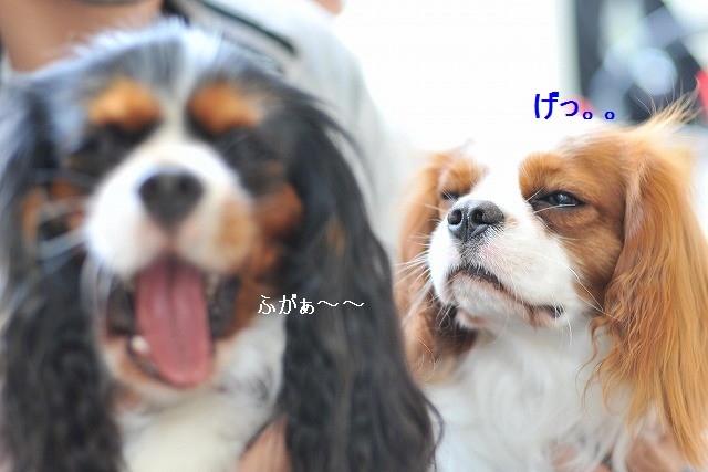 2009.5.30(キャバリア撮影会@豊洲) 170