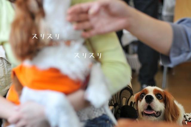 2009.5.30(キャバリア撮影会@豊洲) 167