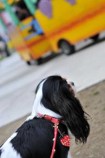 2009.5.30(キャバリア撮影会@豊洲) 189