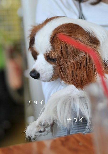 2009.5.30(キャバリア撮影会@豊洲) 146