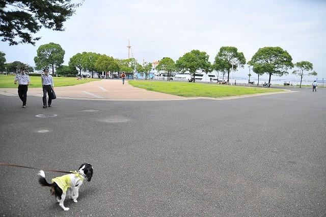 2009.7.18(ララ君&タフィー 014