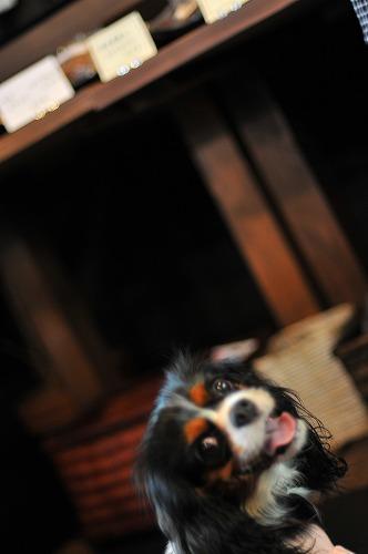 2009.7.25(犬茶屋本舗) 016