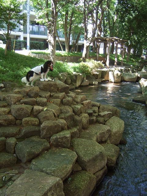 2009.8.15(親水公園) 119