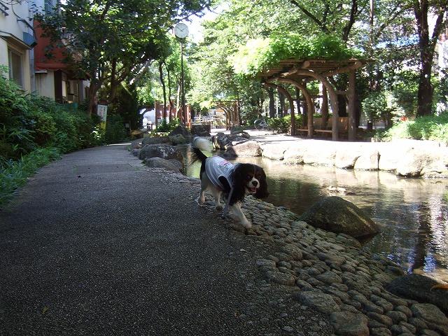 2009.8.15(親水公園) 092
