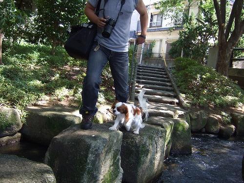 2009.8.15(親水公園) 104