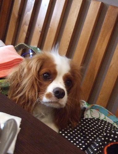 2009.8.15(親水公園) 264