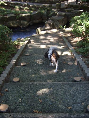 2009.8.15(親水公園) 098