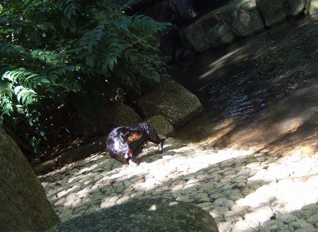 2009.8.15(親水公園) 213