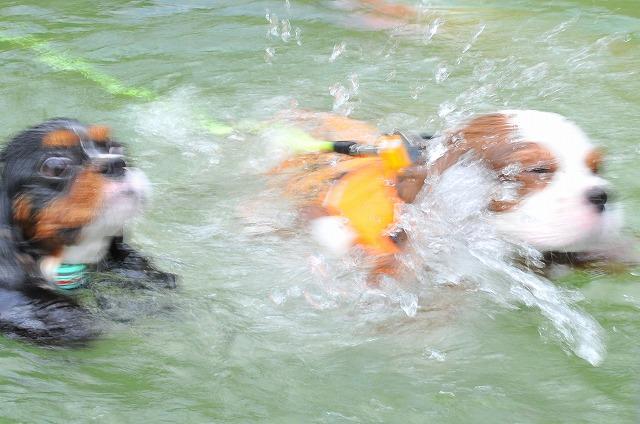 2009.8.29(名栗湖カヌー体験) 097