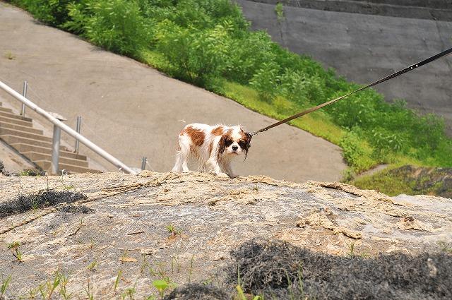 2009.8.29(名栗湖カヌー体験) 247