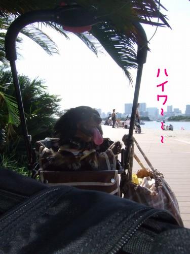 2009.9.6(お台場うしすけ) 029