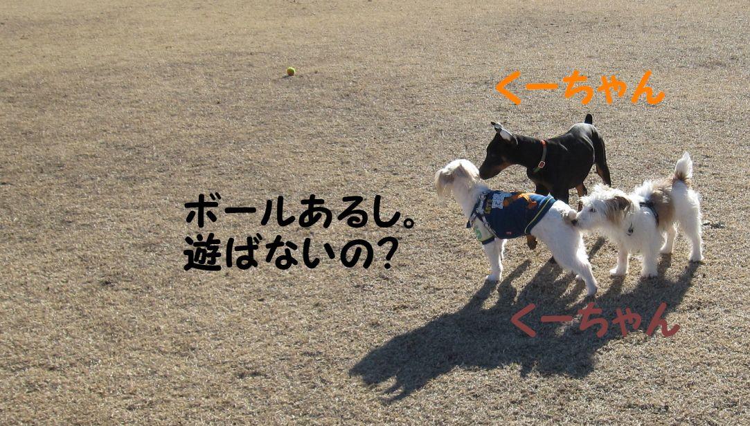 s_くーちゃん人気