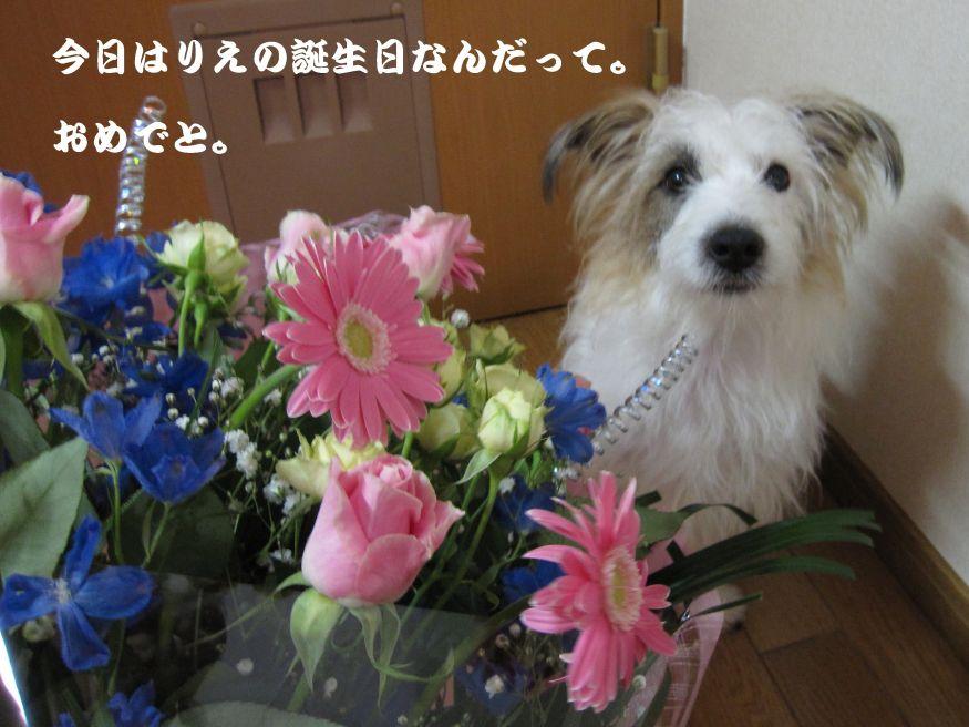 s_りえの誕生日