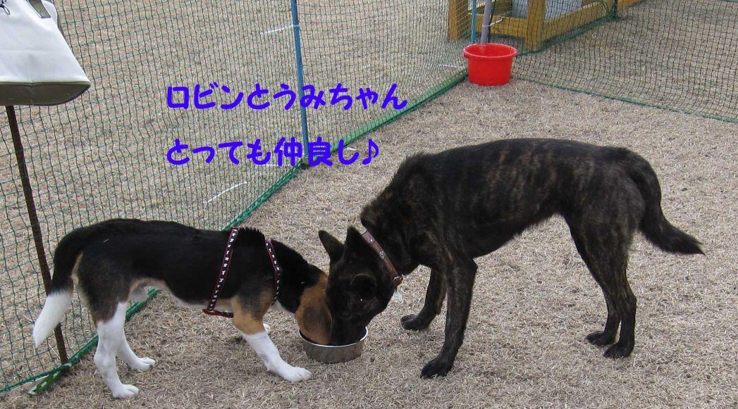 ロビンとうみちゃん1~1