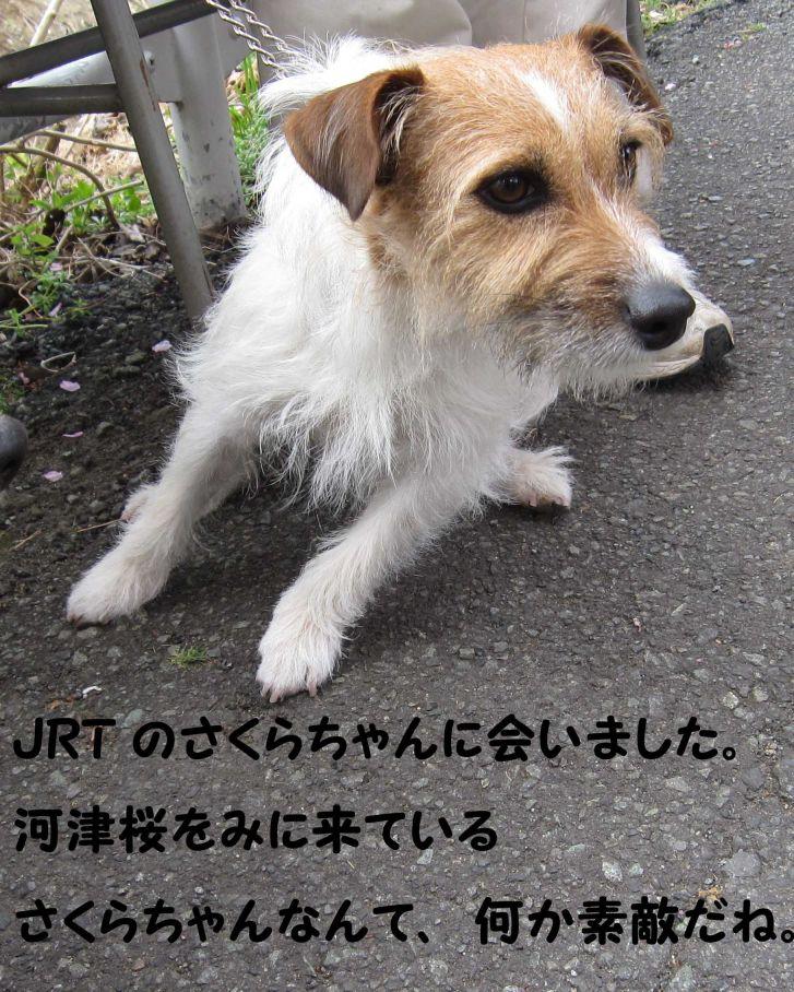 s_さくらちゃん
