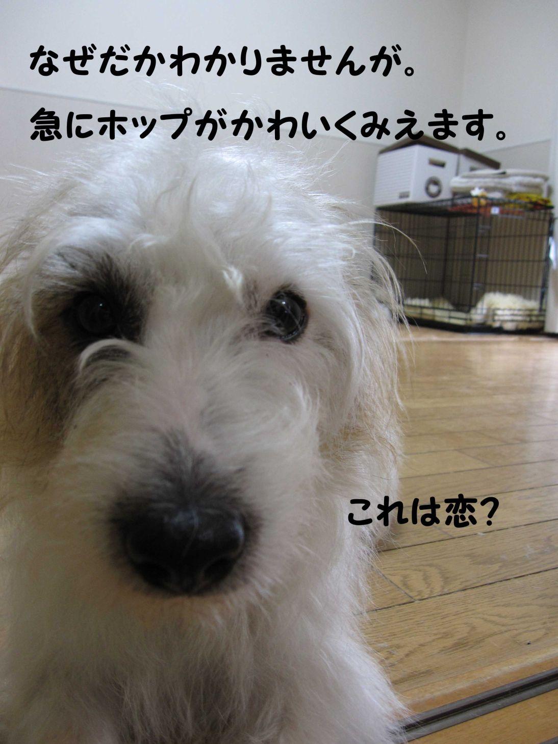 s_ラオホ 恋