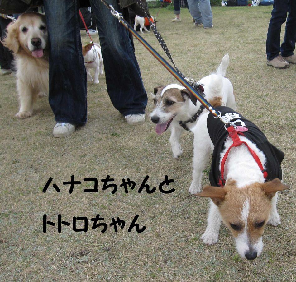 s_ハナコちゃんとトトロちゃん