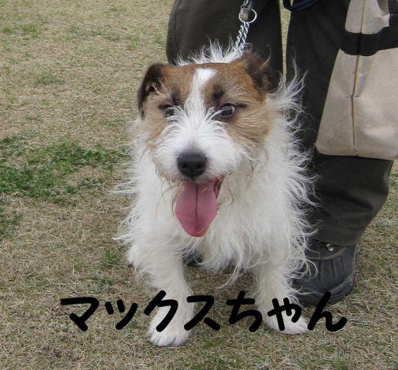 s_マックスちゃん