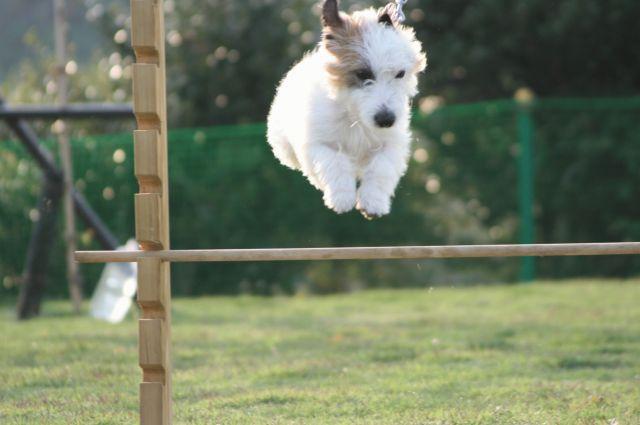 スポーツ犬