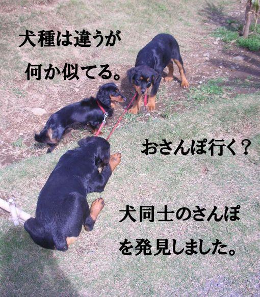 s_犬同士のおさんぽ