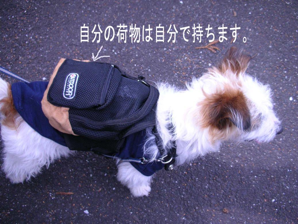 s_花見1
