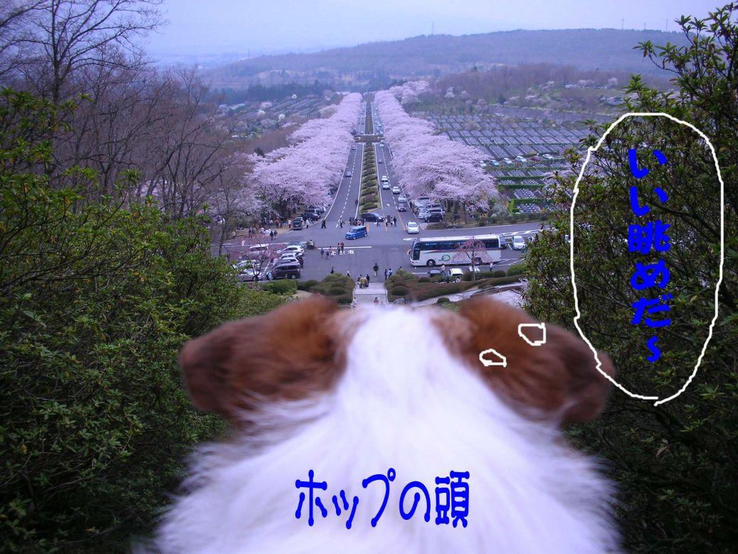 s_花見3