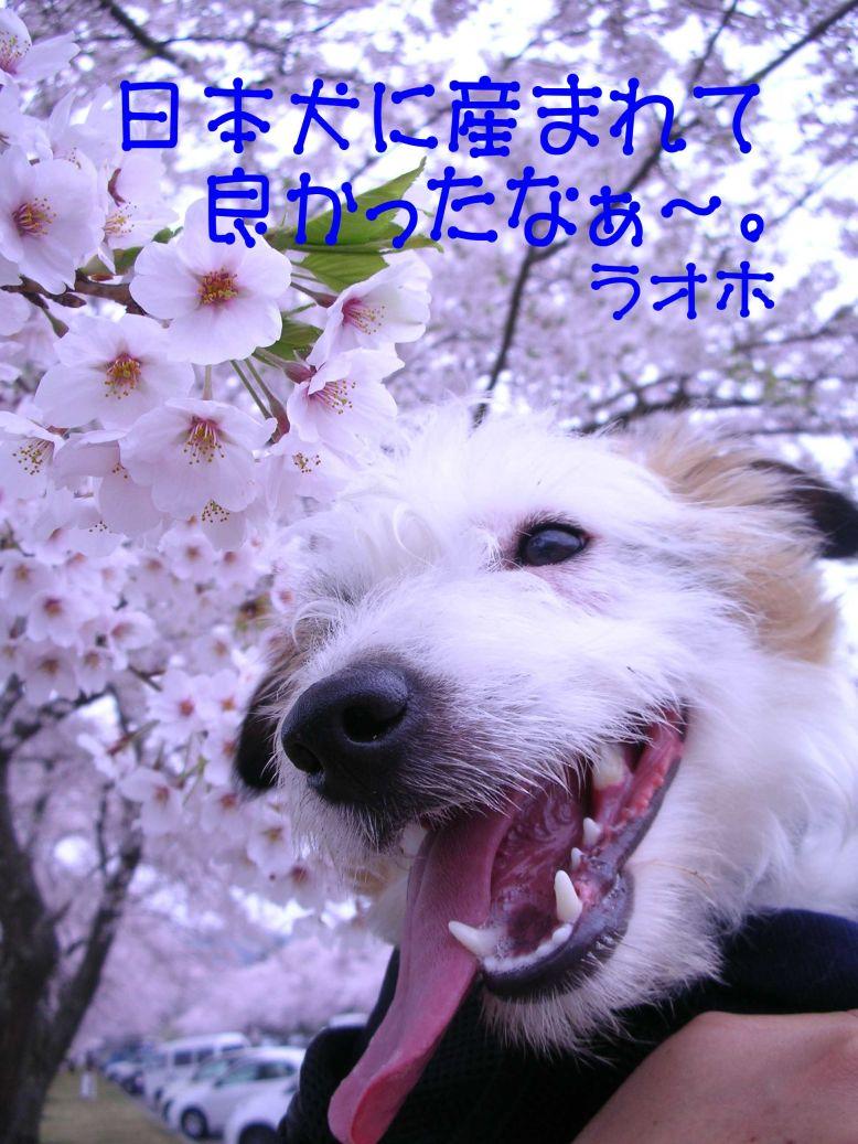 s_花見2