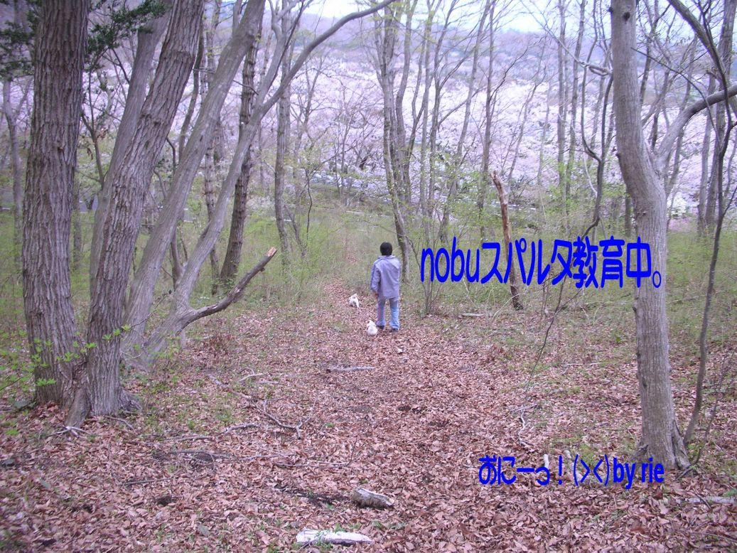 s_花見4
