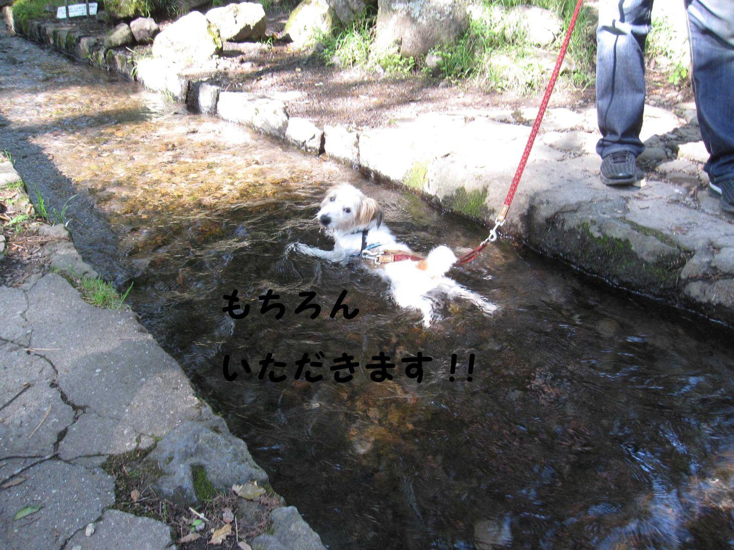 s_名水いただき