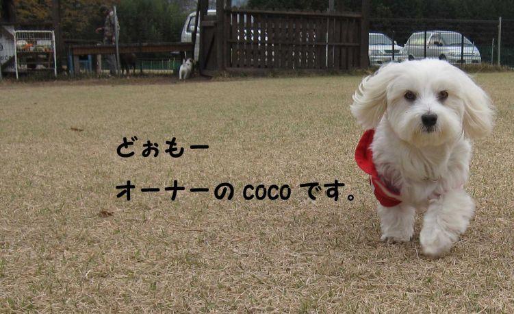 s_COCO
