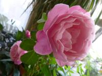 Soeur Emmanuelle (Misato)